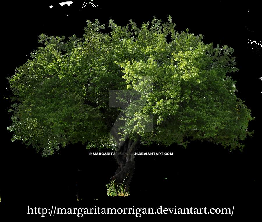 tree by margarita-morrigan