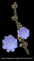 cornflower by margarita-morrigan