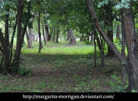 forest by margarita-morrigan