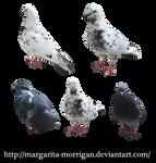 doves by margarita-morrigan