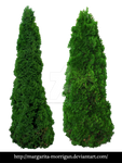 Cypress_01