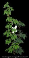 Parthenocissus tricuspidata 2