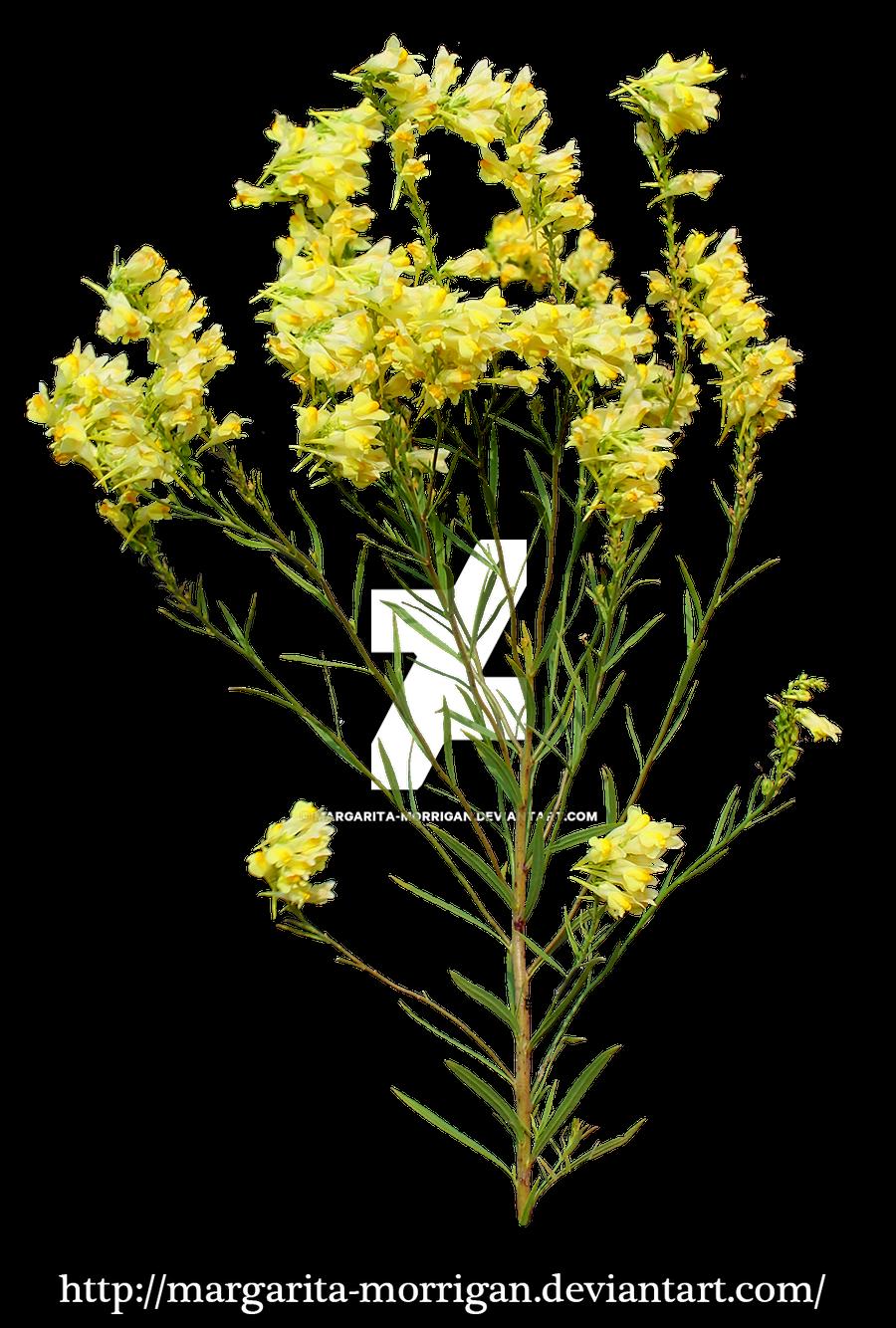 Yellow flowers by margarita morrigan on deviantart - Trees that bloom yellow flowers ...