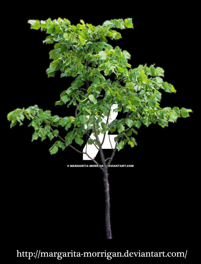 Small tree by margarita morrigan on deviantart for Short trees
