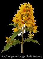 flower yellow 2