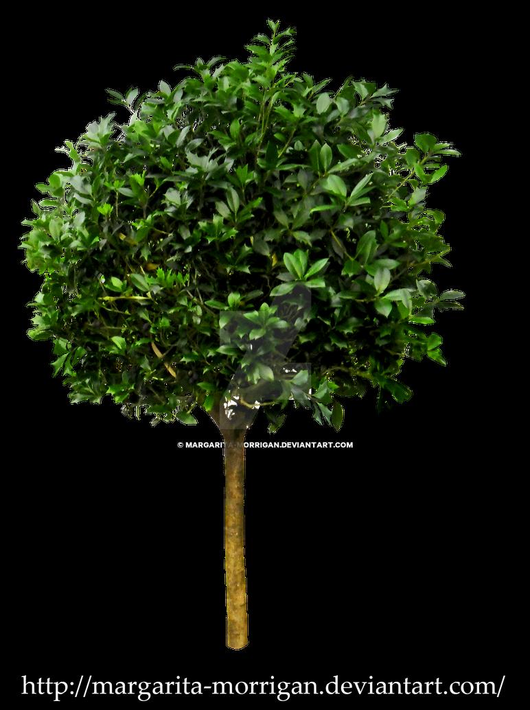 Small tree 1 by margarita morrigan on deviantart for Short trees