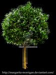 small tree 1
