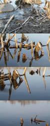 marsh mud by margarita-morrigan