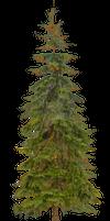 Fir - tree 1
