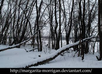 Winter forest 5 by margarita-morrigan