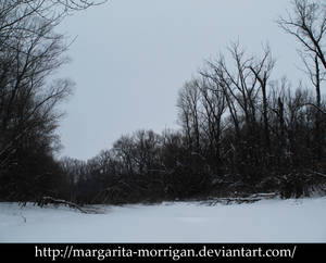 Winter forest 6