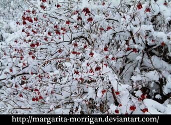 winter  berries by margarita-morrigan