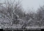 winter background 3 by margarita-morrigan