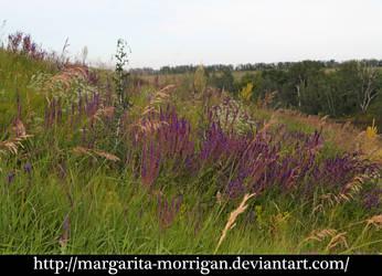 meadow 3 by margarita-morrigan