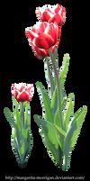 Tulips 3 by margarita-morrigan