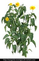 Plant with yellow flowers by margarita-morrigan