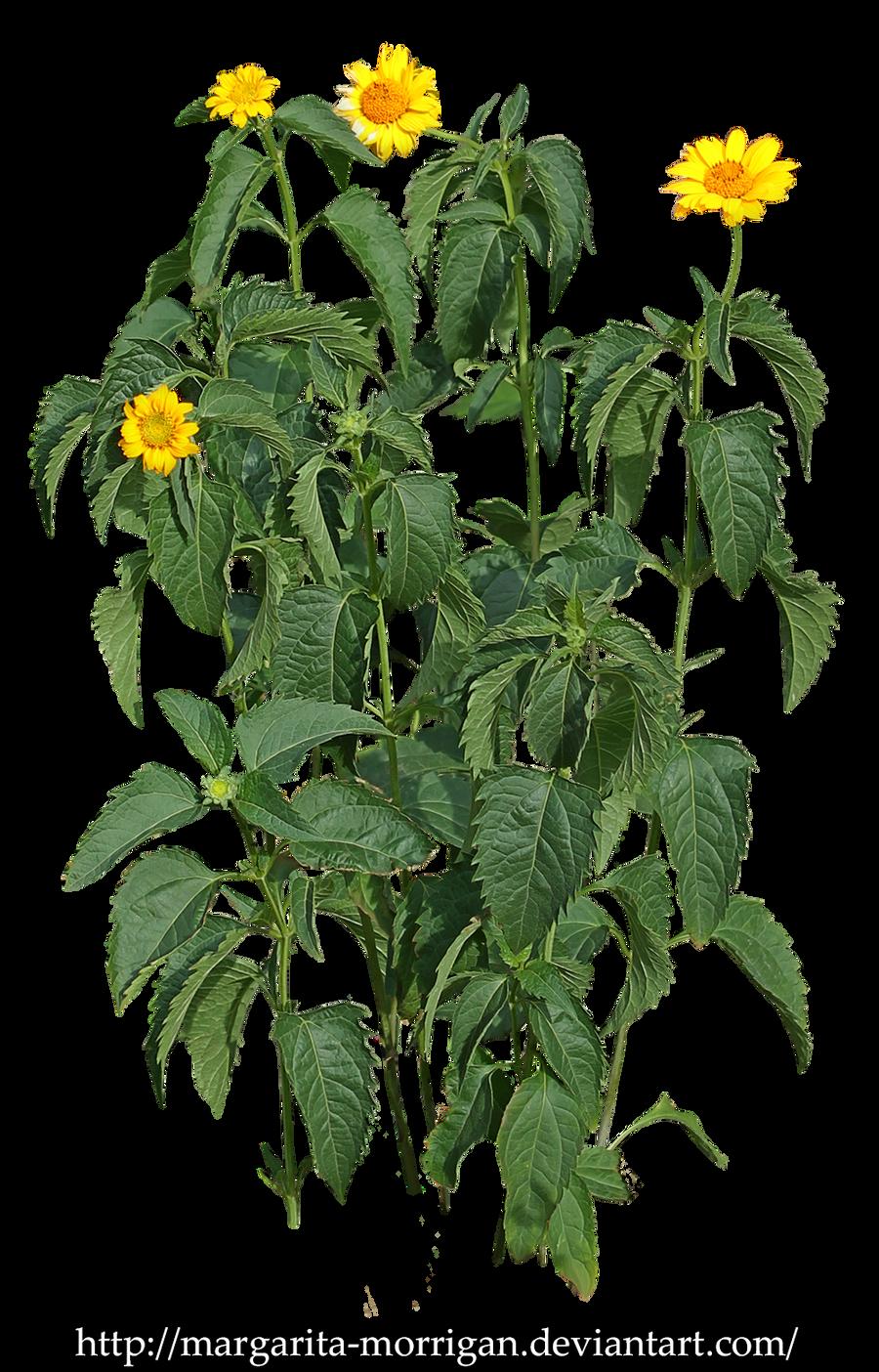 Plant with yellow flowers by margarita morrigan on deviantart plant with yellow flowers by margarita morrigan mightylinksfo