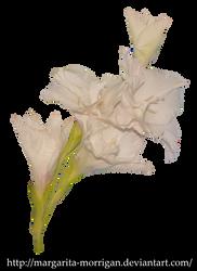 White Gladiolus by margarita-morrigan