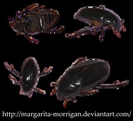 beetle by margarita-morrigan