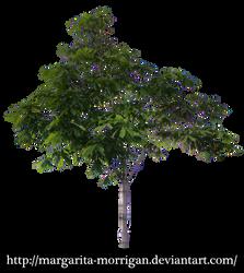 Chestnut tree by margarita-morrigan