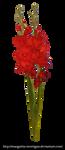 Red gladiolus by margarita-morrigan