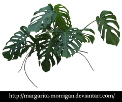 Monstera by margarita-morrigan