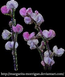 purple flowers by margarita-morrigan