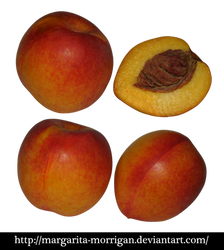 nectarine fruit by margarita-morrigan