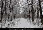 winter background5