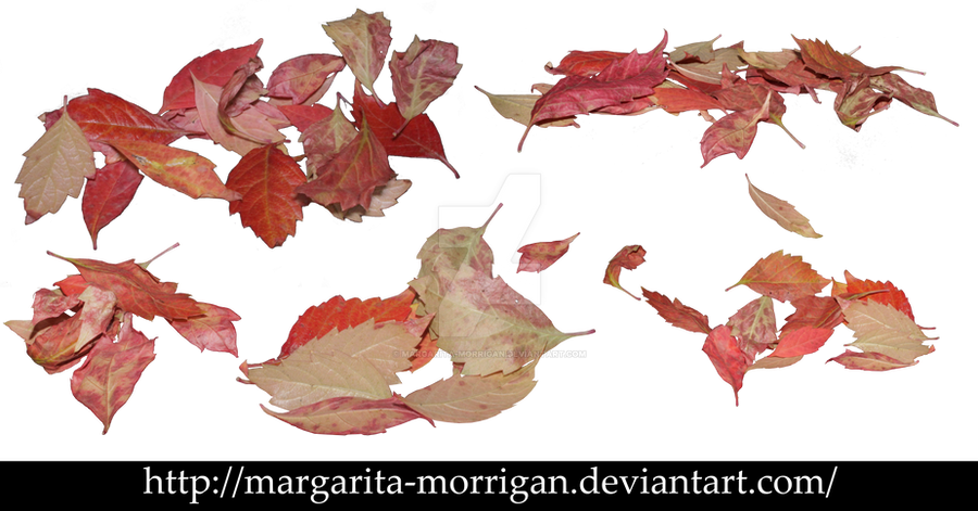 Red autumn leaves by margarita-morrigan