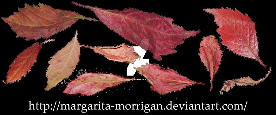 Red autumn leaves 1 by margarita-morrigan