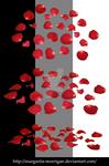 rose petals1