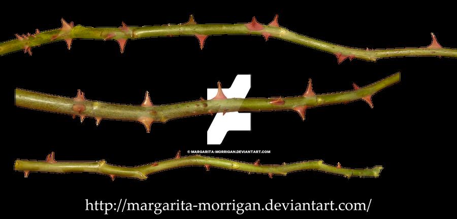 thorns of roses 1 by margarita-morrigan