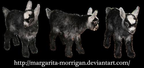 goatling by margarita-morrigan