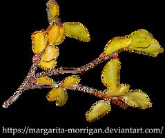 autumn branch by margarita-morrigan