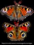 butterflies_01 by margarita-morrigan