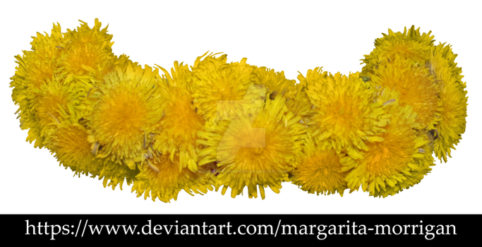 Wreath of dandelions