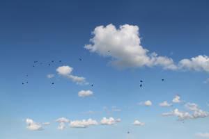 sky clouds birds