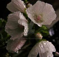 The Petals and the Rain I
