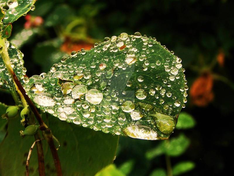 The Leaf and the Rain