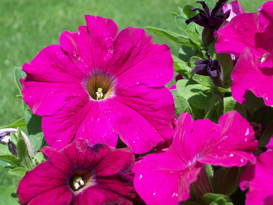 Summer Blooms by RyosukeHikashu