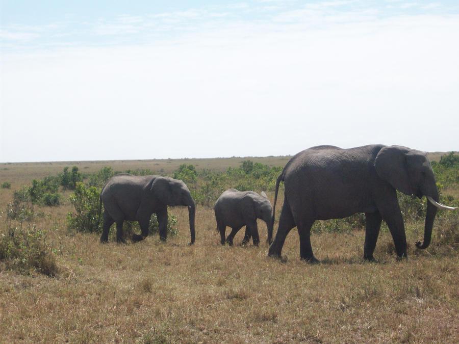 Wild Elephant Family by RyosukeHikashu