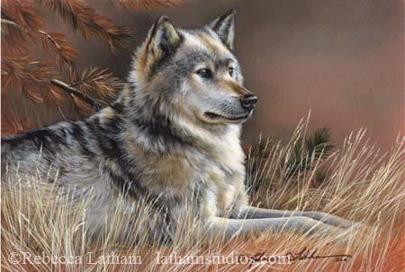 At Rest - Timberwolf