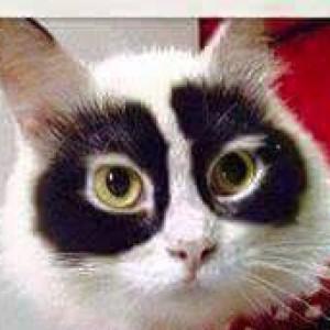 PandaPelt's Profile Picture