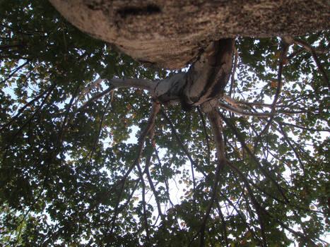 Below the Big Tree