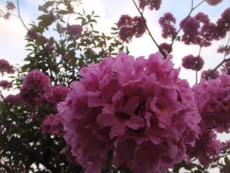 Pinky Spring