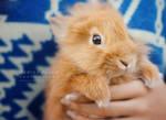 Sunny bunny blues