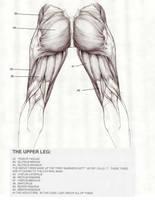 Upper leg back by Blaw81