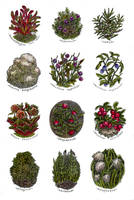 Northern herbs - watercolor by JuliaTar