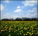In my field of yellow flowers